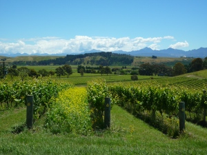Greywacke vineyard visit, Marlborough, New Zealand  -December 2011